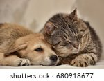 cat and puppy | Shutterstock . vector #680918677