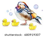 watercolor mandarine duck with... | Shutterstock . vector #680919307