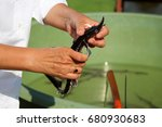 Small photo of Biologist catching and implanting microchips to sturgeons (Acipenser stellatus)