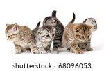 Stock photo group kitties on white background 68096053