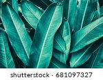 tropical leaves | Shutterstock . vector #681097327