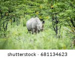 black rhino starring at the... | Shutterstock . vector #681134623
