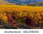 Napa valley in the fall when...