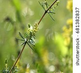 Small photo of Weedy field plants