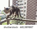 Safety Window Cat