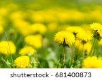dandelions grass field with... | Shutterstock . vector #681400873
