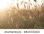 spikelets of grass beautifully... | Shutterstock . vector #681410263