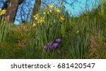 spring flowers   Shutterstock . vector #681420547