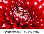 macro of a flower | Shutterstock . vector #681424987