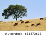 countryside landscape. cow and... | Shutterstock . vector #681573613
