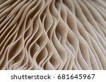 Abstract Mushroom Macro