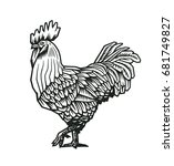 rooster or cock hand drawn in... | Shutterstock .eps vector #681749827