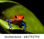 Red Poison Dart Tree Frog On...