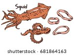 live fresh squid with tentacles.... | Shutterstock .eps vector #681864163