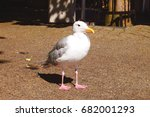 Small photo of baby albatross seagull marketplace browsing