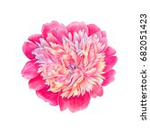 watercolor hand painted peony... | Shutterstock . vector #682051423