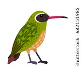 xantus    small nectar feeding... | Shutterstock .eps vector #682151983