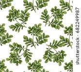 moringa. seamless botanical... | Shutterstock .eps vector #682249987