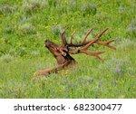 bull elk with magnificent rack  ...   Shutterstock . vector #682300477