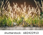 pigeon in the grass  | Shutterstock . vector #682422913