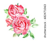 Three Pink Roses. Watercolor...