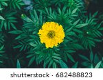 yellow flowers with green leaf... | Shutterstock . vector #682488823
