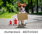Small photo of lost and homeless jack russell dog with cardboard hanging around neck, abandoned at the street and luggage or bags waiting to be adopted