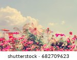 retro pink and yellow cosmos... | Shutterstock . vector #682709623