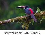 collared aracari perched on... | Shutterstock . vector #682860217