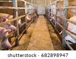 a pig in the farm. | Shutterstock . vector #682898947
