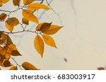 autumn beech leaves  yellow... | Shutterstock . vector #683003917