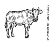 cow animal. hand drawn sketch... | Shutterstock . vector #683196613