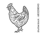 chicken  hen bird  poultry ... | Shutterstock . vector #683208043