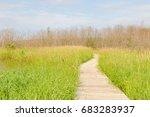 walkway over swamp | Shutterstock . vector #683283937