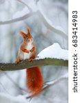 Cute Orange Red Squirrel Eats ...