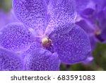 Close Up Orchid Lavender   Ver...