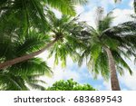 Tropical Coconut Palms Against...