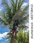 a gardener climb to the top of...   Shutterstock . vector #683738413