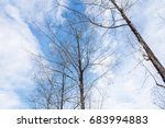 dead trees perennial with... | Shutterstock . vector #683994883