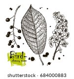 vintage graphic vector leaves ... | Shutterstock .eps vector #684000883