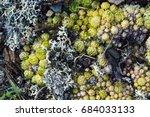 green and yellow sempervivum... | Shutterstock . vector #684033133