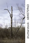 Small photo of standing dead tree, vital for wildlife