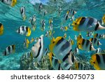 shoal of fish pacific double... | Shutterstock . vector #684075073