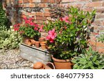 clay pots and beautiful flowers ... | Shutterstock . vector #684077953
