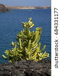 Cactus Bush  Rock Stone Sky ...