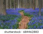 hallerbos  beech forest in... | Shutterstock . vector #684462883