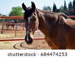 portrait of horse's head in a... | Shutterstock . vector #684474253