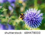 Bumblebee And Blue Flowering...