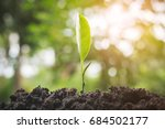 the seedling green sprout are... | Shutterstock . vector #684502177