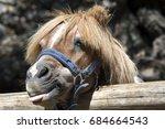 Pony With A Hair Funny Pony...